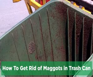 How To Get Rid of Maggots in Trash Can